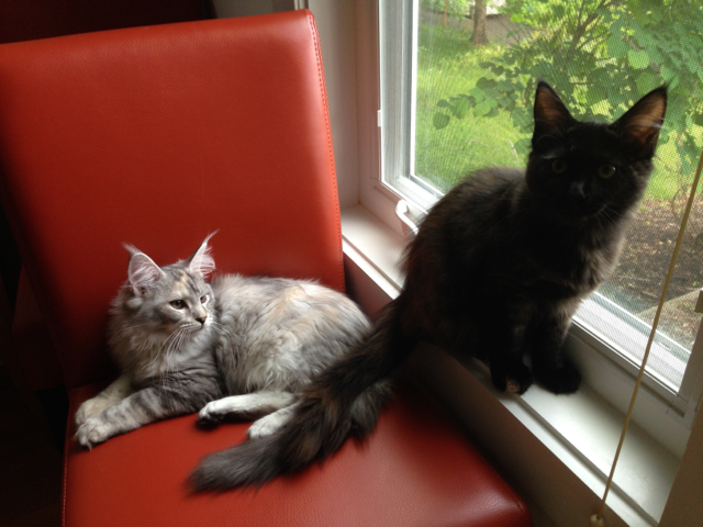 cats_in_the_window.png