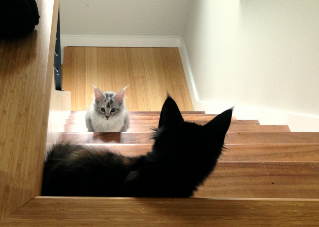 cats_on_stairs.png