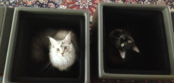 cats_in_boxes